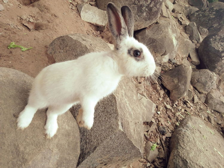 Animal Themes One Animal Sand Mammal Domestic Animals Day High Angle View Pets Outdoors Beach Portrait Looking At Camera No People Animals In The Wild Nature Close-up Zoo Animals  Rabbit Face Stand Alone Rabbit Portrait Rabbit Faces Cute Rabbit ,bunny Pet Life  Lovely Animals In The Wild
