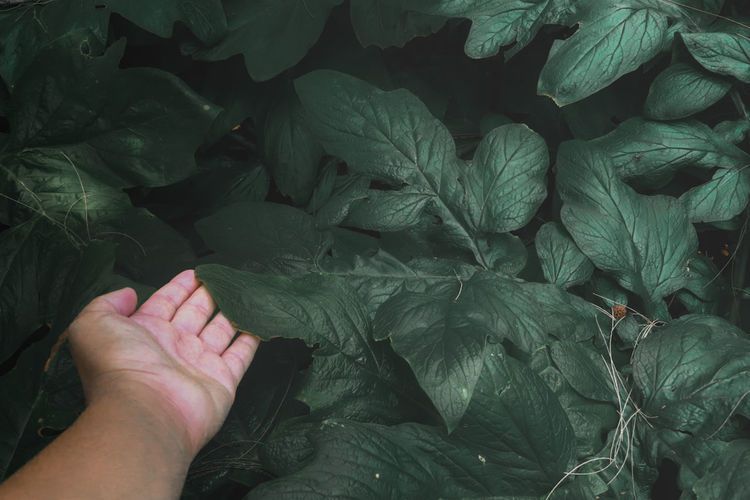 Close-up of hand with leaves