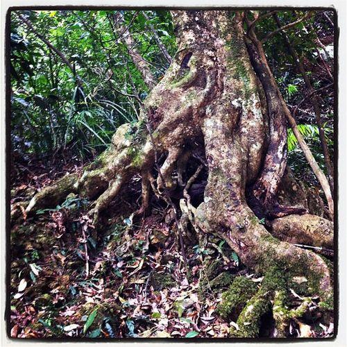 Rainforest Woolgoolgacreek
