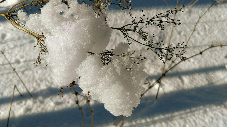 снег на ветках снег снежный снег на ветке Winter EyeEmNewHere Tree Trapped Spider Web Branch Close-up Sky Plant