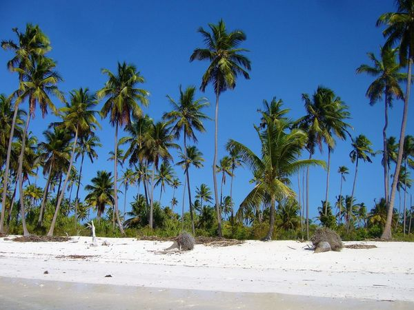 Holiday Palmer Palmiers 🌴👣 Zanzibar Craobhan Pailme Cây Cọ Palm Tree Palmeras Palmy Pictura Palmarum Tranquil Scene φοίνικες Занзибар أشجار النخيل তালগাছ ต้นปาล์ม แซนซิบาร์ ザンジバル 桑給巴爾 棕櫚樹