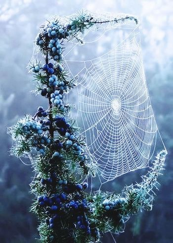 Spider Web Nature No People Outdoors Web Close-up Day Fragility Tree Beauty In Nature Sky Freshness