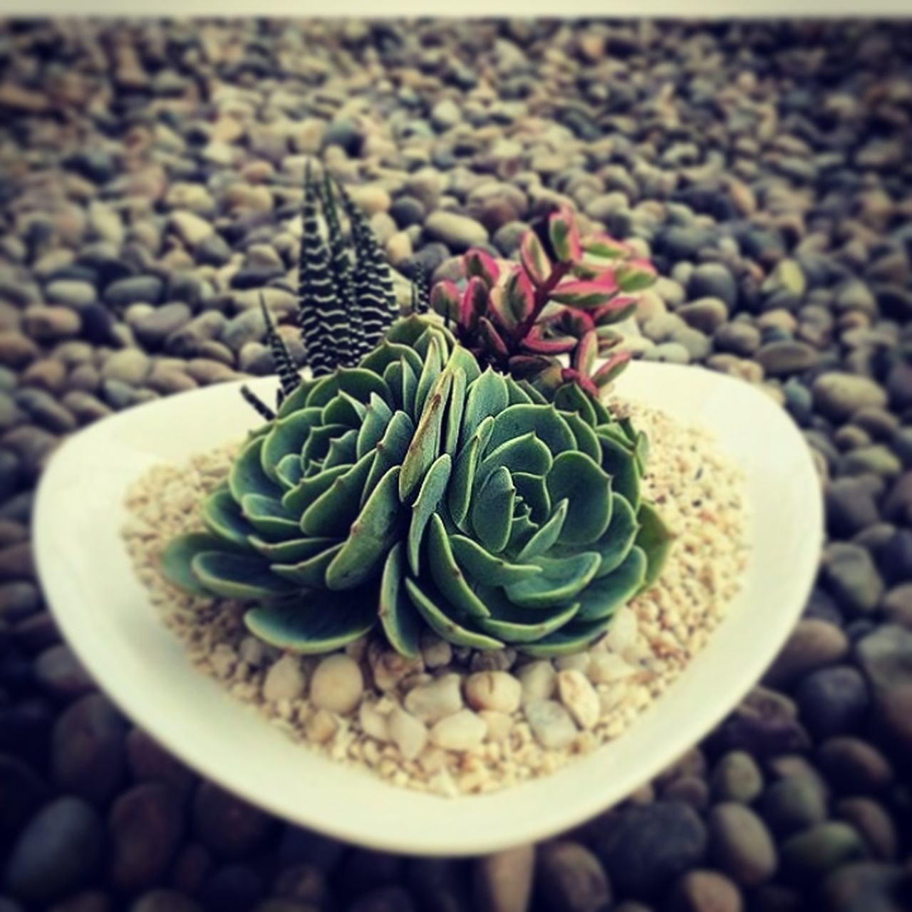 green color, pebble, cactus, close-up, freshness, nature, no people, day, growth, food, indoors, healthy eating, beauty in nature