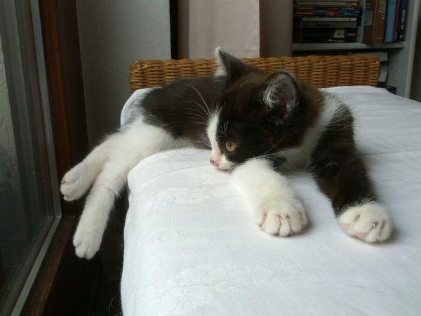 Cat Cat Lovers Cats Of EyeEm Cats Cat♡ Kitty Relaxing Sleeping