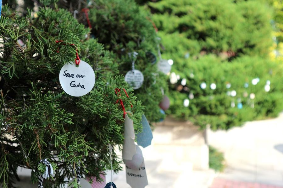 Text Green Color Communication Freshness Close-up Ewha Womans University Focus Saveourewha Tree Day