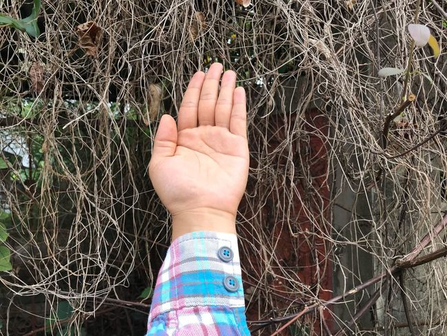 Human Hand Human Body Part One Person Real People Day Leisure Activity Outdoors