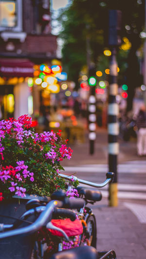 Purple flowering plant on street in city