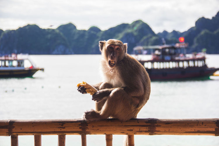 Monkey sitting on railing by river against sky