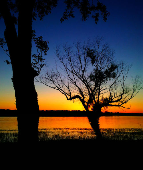 Beauty In Nature Branch Day Idyllic Landscape Nature No People Outdoors Scenics Sea Silhouette Sky Sun Sunset Tranquil Scene Tranquility Tree Water