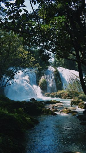 Waterfall Tree River Water Nature Scenics Beauty In Nature