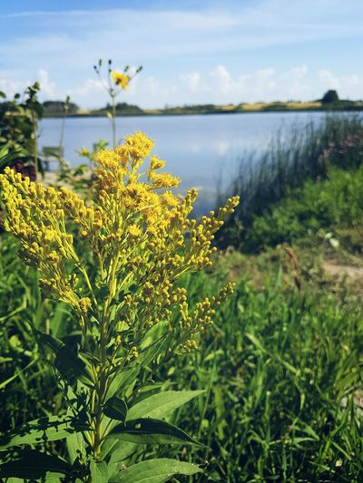 Manitoba Canada Manitoba Flower Nature Outdoors Beauty In Nature Landscape Lake Water Scenics Photography Freshness