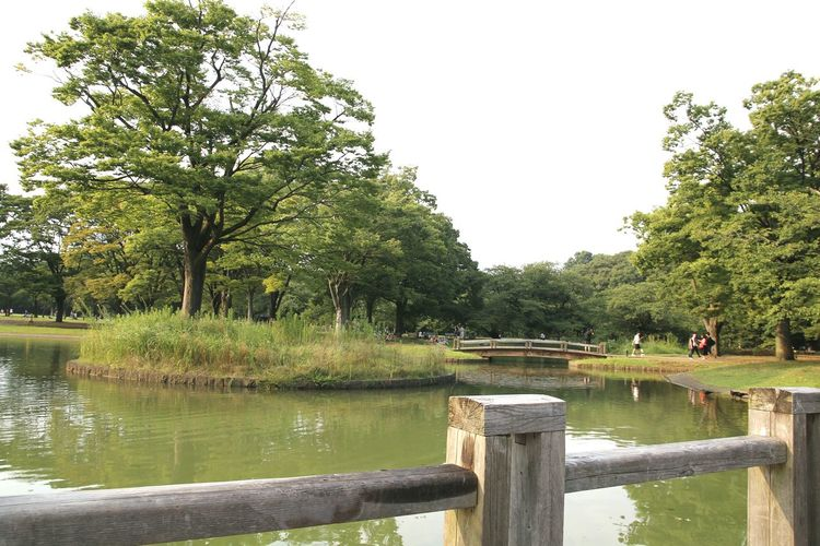 Scenic view of lake in park against clear sky