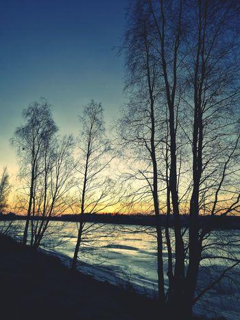 Iced River ❄ Sunrise Tree Silhouette Morning Light