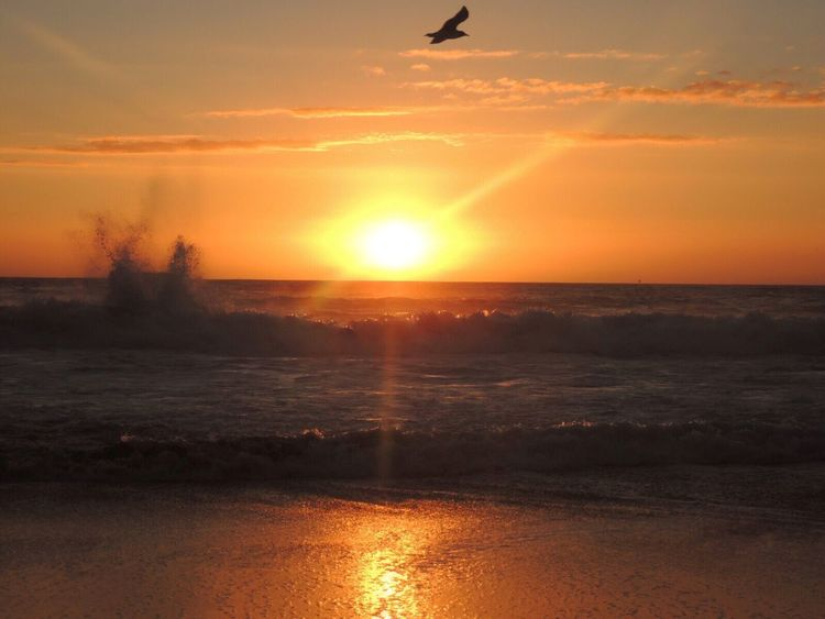 https://youtu.be/DkPVN_m99Xk Sunset Capture The Moment Beautiful Sunset Sun Reflection On Sand Waves Crashing Waves, Ocean, Nature Sun Rays Of The Sun Bird Flying Beach Photography Life Is A Beach Enjoying The Sunset Walking On The Beach Reñaca Beach , Chile