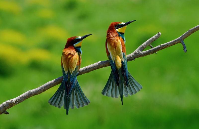 Animal Animal Themes Beauty In Nature Bird Bird Photography Birds Birds_collection Birds🐦⛅ Birdwatching Day Green Color Nature Outdoors Nature's Diversities - 2016 EyeEm Awards