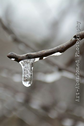 Ice Icecyles