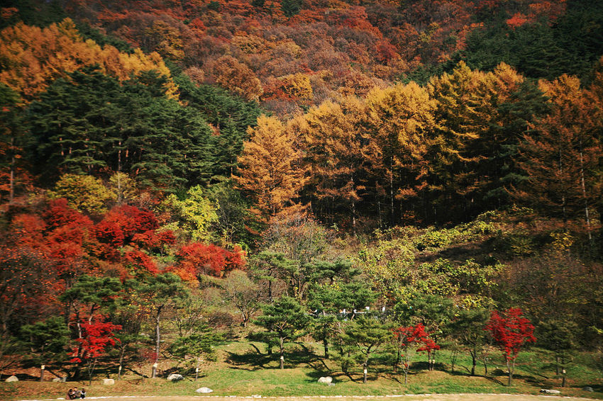 Munkyung Autumn Munkyungsaejae Autumn Colors Autumn Leaves South Korea Korea