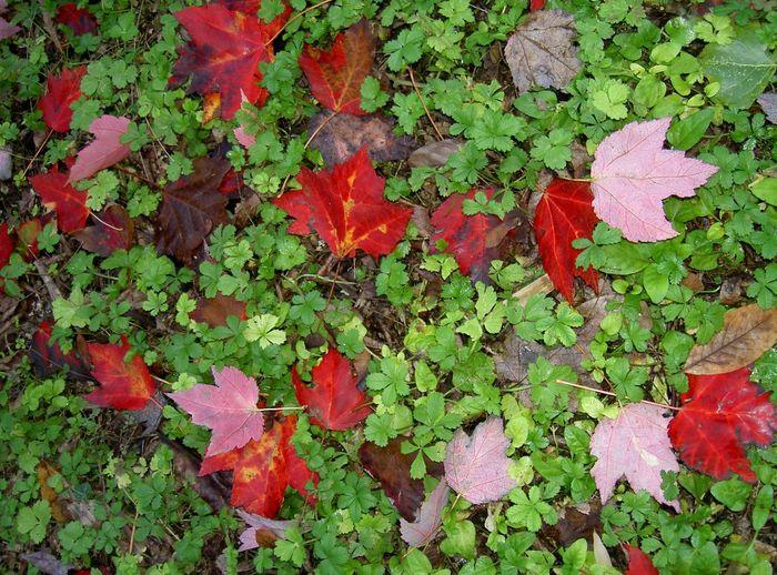 Ninfa's gardens Fall Beauty Colors Silhouette Getting Inspired EyeEm Best Shots - Nature Garden Leaves Autumn Colors Ninfa OpenEdit