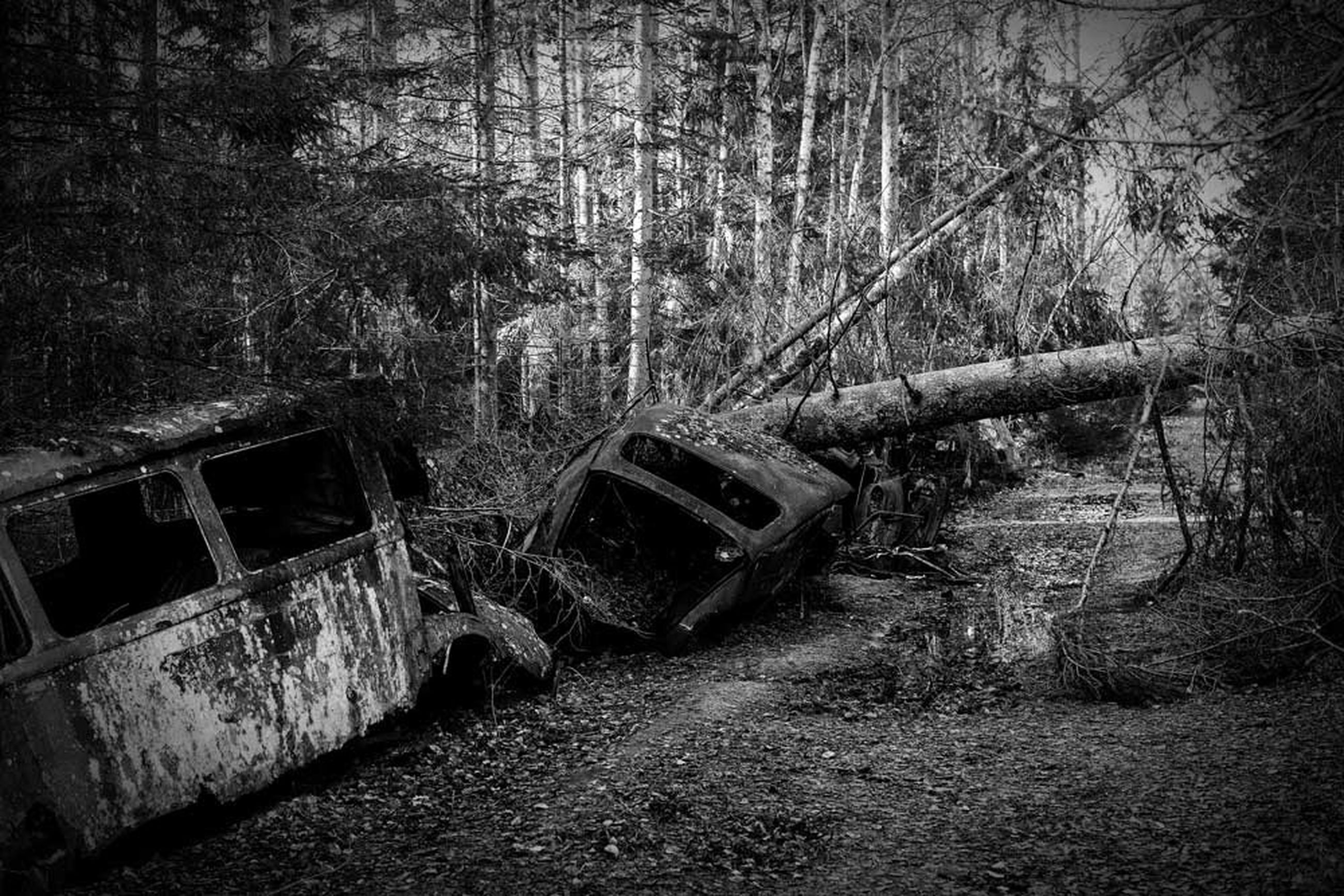 tree, abandoned, damaged, obsolete, transportation, old, run-down, forest, deterioration, built structure, mode of transport, nature, outdoors, no people, day, architecture, destruction, broken, bare tree, branch