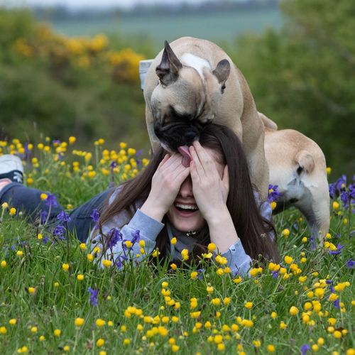French bulldog kisses #frenchbulldog #frenchie #puppy #kisses #bluebells EyeEm Selects Flower Human Hand Meadow Grass Close-up Wildflower Dandelion In Bloom Blossom
