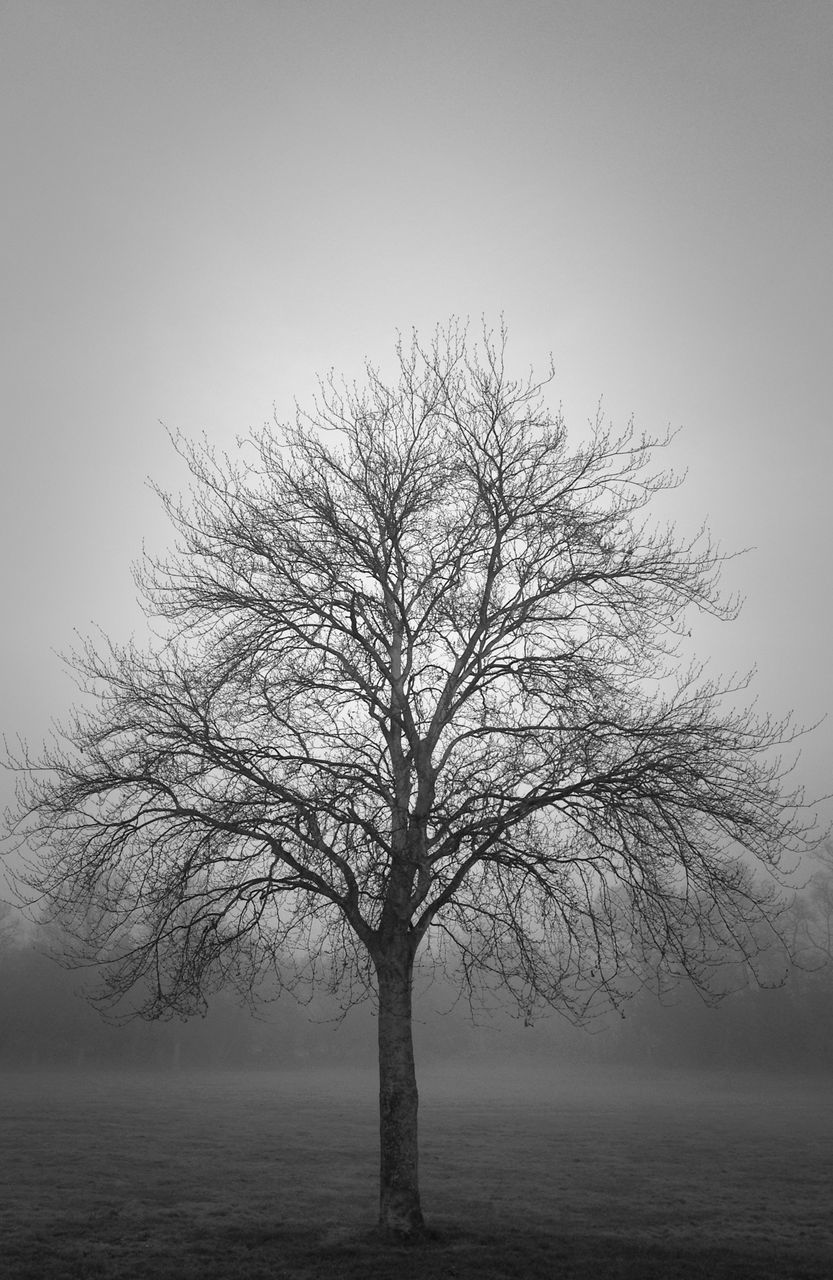 bare tree, lone, tranquility, branch, isolated, tree, tranquil scene, beauty in nature, nature, clear sky, outdoors, scenics, landscape, day, sky, no people