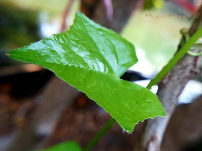 Beauty In Nature Close-up Day Fragility Freshness Green Color Leaf No People Outdoors Selective Focus Water