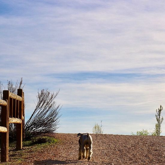 Perro caminando. Perro Schanze Dog Animal Canon Fotografia Canonphotography Photographer Photography Madrid