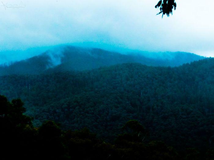 Yarra Ranges National Park Mountain Range Cold Winter Australia Low Clouds Gumtrees Victoria, Australia Reefton Spur The Demons Double Tree Mountain Fog Forest Sky Landscape
