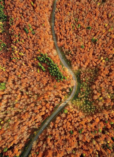 Flying High above the black forest Leaf Nature Autumn Backgrounds Red Full Frame Agriculture Footpath No People Rural Scene Outdoors Landscape Composition Beauty In Nature Day Close-up Freshness