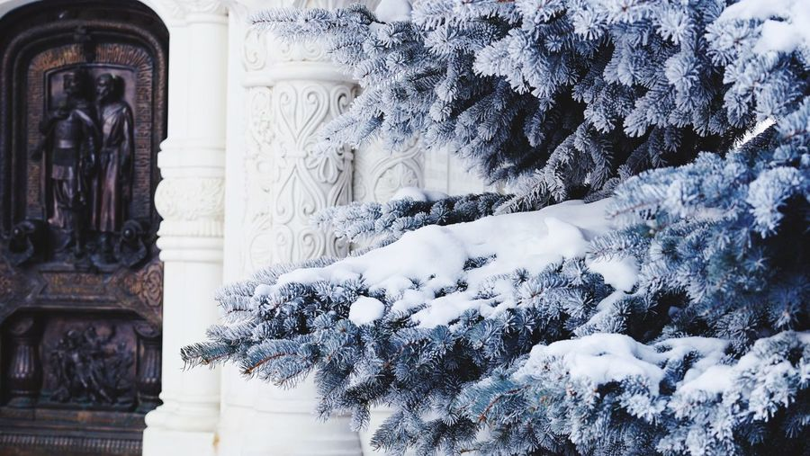 Snow spruce Snow Frozen Spruce Tree Spruce Architecture No People Plant Tree Building Day Religion Winter
