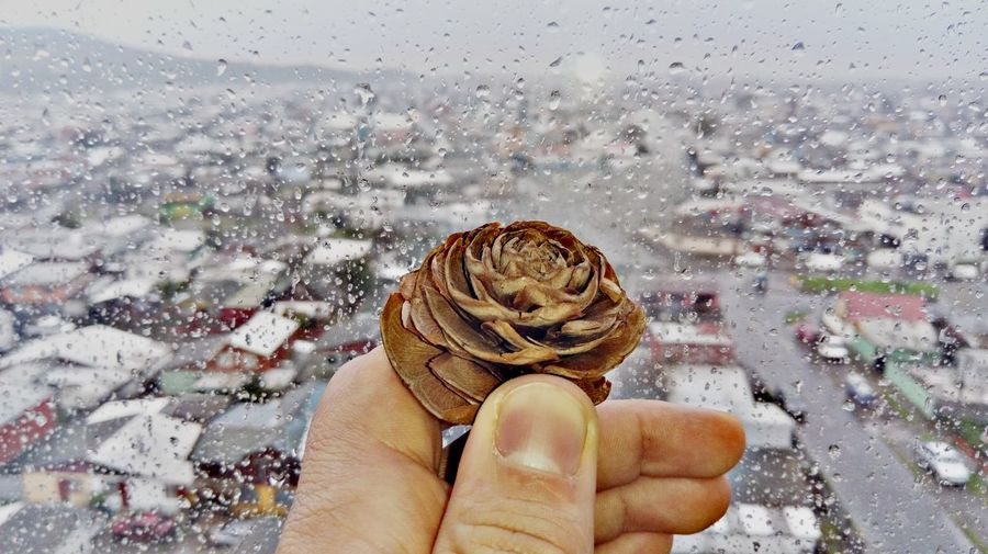 Cropped hand holding pine cone against wet window during rainy season
