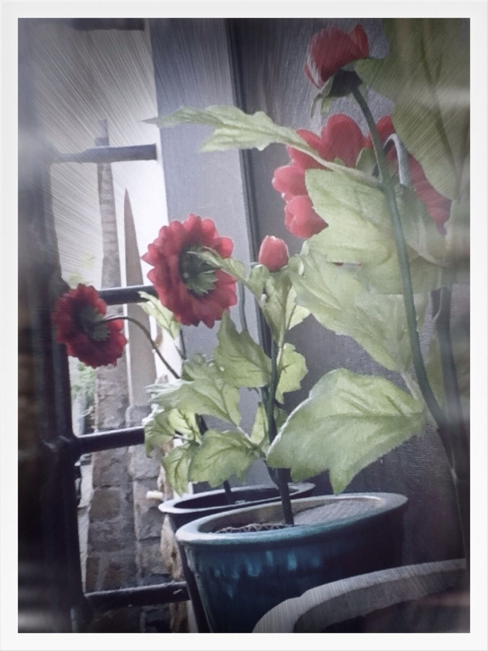 flower, plant, growth, potted plant, freshness, transfer print, window, indoors, fragility, window sill, vase, leaf, auto post production filter, petal, glass - material, close-up, nature, flower pot, built structure, flower head
