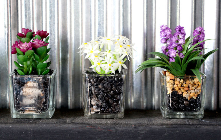 Flowers in a glass vase with coffee beans in a vase are placed on wooden shelves in Thailand. Wall Zinc Zinc Wall Colorful Vase Glass Vases Thai Coffee Shop Coffee Beans Thailand Travel Summer Holiday Health Healthcare Spring Flower Flower Flower Head Bouquet Curtain Multi Colored Jar Vase Females Purple Window Flower Arrangement Sunflower Flower Market Pollen