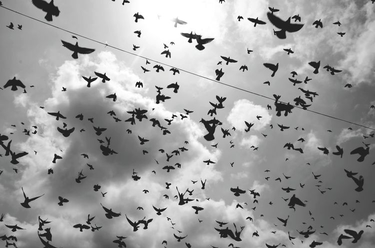 Monochrome Photography Bird Low Angle View Flying Spread Wings Flock Of Birds Freedom Sky Migrating Togetherness Nature Mid-air Cloud - Sky Travel Malayali Monochrome Black & White Blackandwhite Cloud Street Travel Explore The World Wanderlust Malayalee Nature Wanderingalien