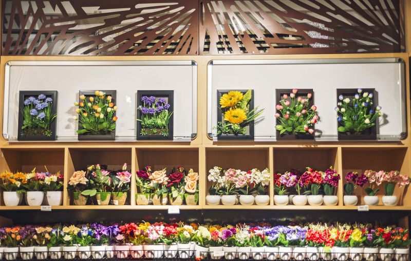 Choice Variation Arrangement Freshness For Sale Retail  Large Group Of Objects No People Shelf Indoors  In A Row Plant Store Multi Colored Potted Plant Flower Side By Side Flowering Plant Order Retail Display Sale Temptation Consumerism Supermarket