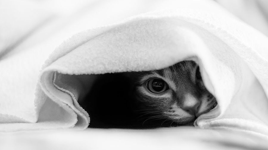 Close-up of cat hiding in bed