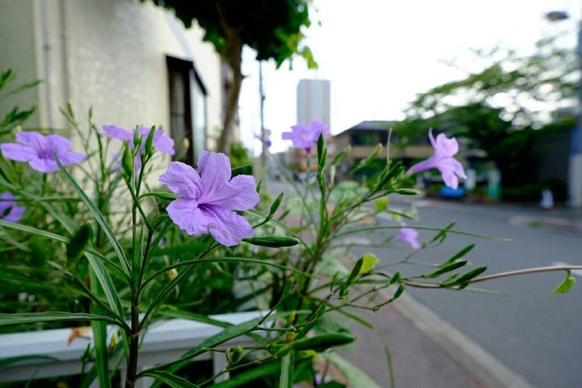 花 Fujifilm X-E2 Fujifilm Fujixe2 Fujifilm_xseries Xf10-24mm Xf1024 Flowers 花 広角 Wideangle