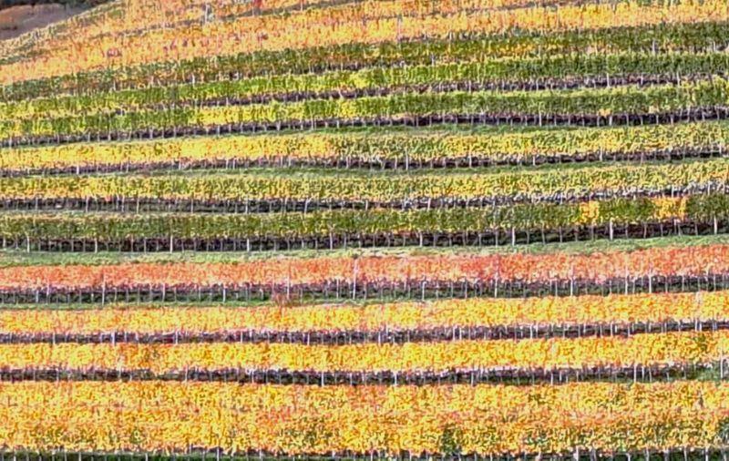 Reben im Herbst
