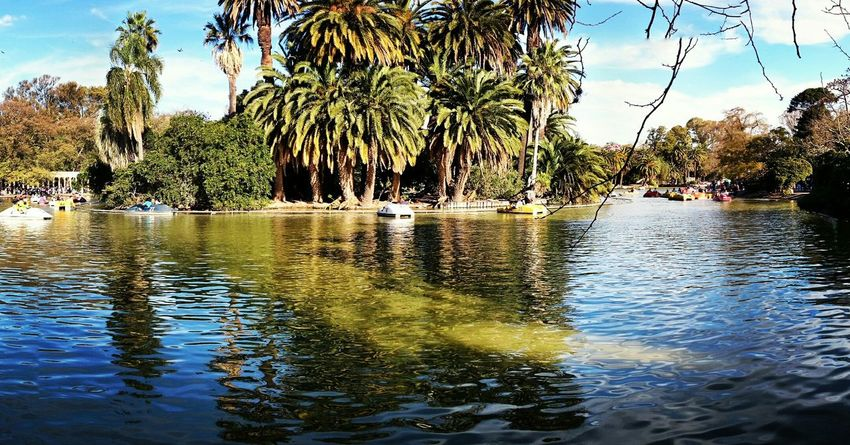 Parque  Parqueindependencia Lago Laguito