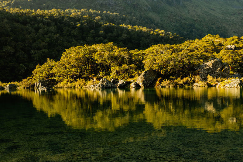 Scenic view of lake and trees