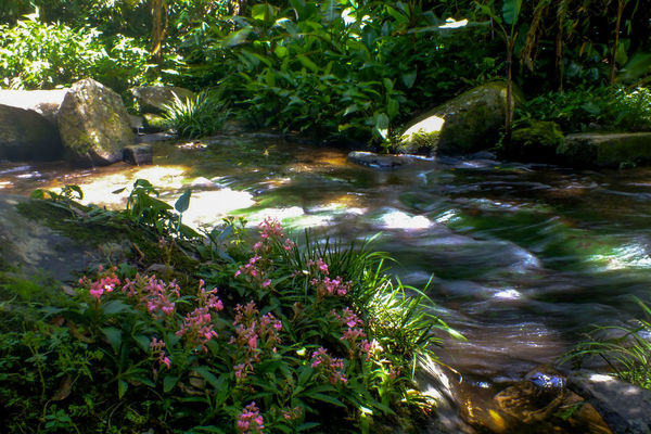 Stream1 Plant Water Nature Flower Growth Green Color Outdoors Tree Beauty In Nature No People Day Freshness Beauty Forest Travel Destinations The Week On EyeEm EyeEmNewHere Wild Flowers Snapdragon Freshness Pink Color Beauty In Nature Growth Vacations Motion Been There.