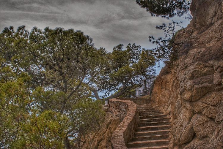 Low angle view of staircase amidst trees against sky