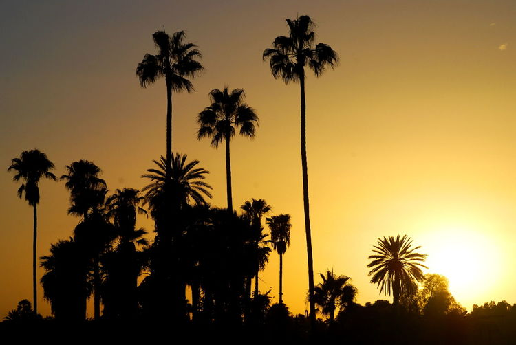 Sunset in Taroudant. Morocco Africa Marrakech Moroccan Morocco Palm Tree Palm Trees Silhouette Summer Sun Sunset Sunset Silhouettes Sunset_collection Sunsetporn Travel Travel Photography Travelphotography 43 Golden Moments