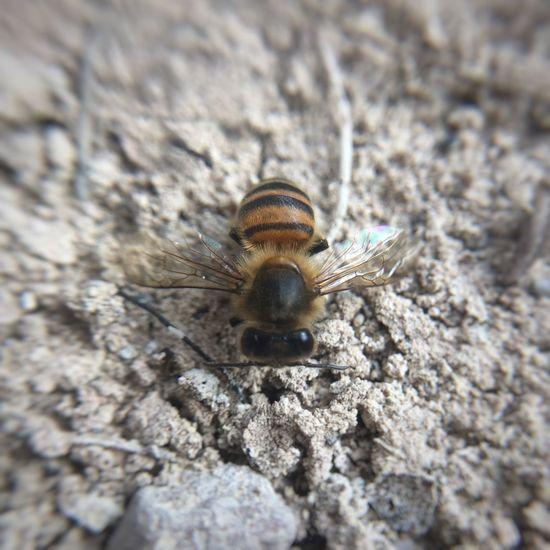 Bee c':