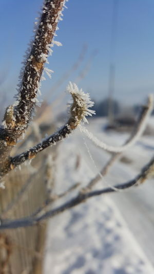 Nature Beauty In Nature No People Outdoors Close-up Frozen Cold Temperature Day Winter Nature Nature Beauty Nature Is Art Snow ❄ Cold And Frosty Snow Day Cold Days Snow❄⛄ Grofovija Samsungphotography No Edit/no Filter No Filter, No Edit, Just Photography
