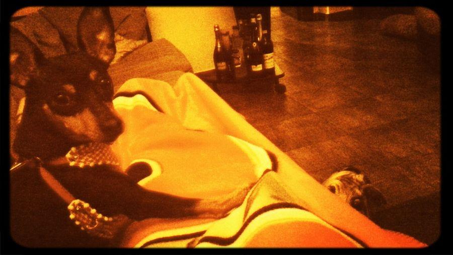 i migliori sabati...pigiamone, cani, pleid e tv!! altro che vasche sul corso XD DalilaDogSitter Puppy Love