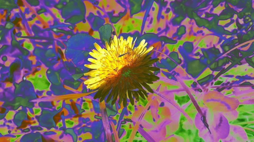 Photo Abstract Filters & Effects Sow Thistle
