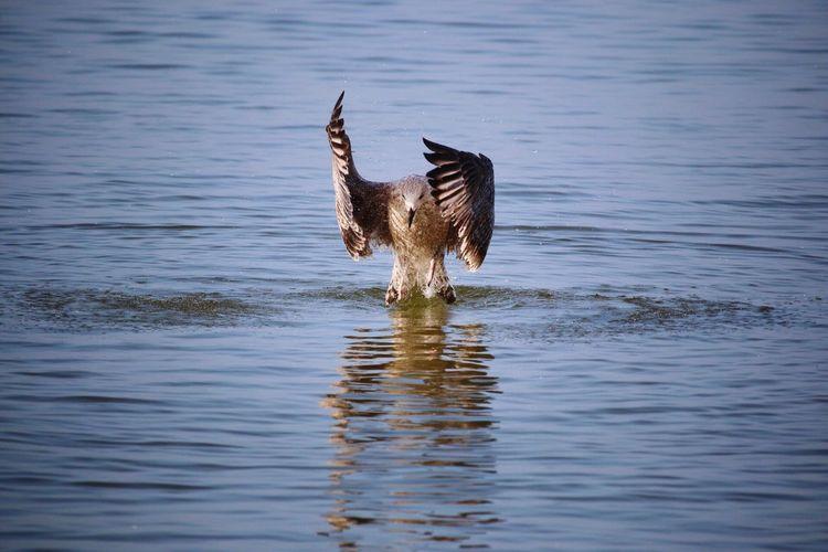 Water Animal Animal Themes Animals In The Wild Animal Wildlife Bird Vertebrate