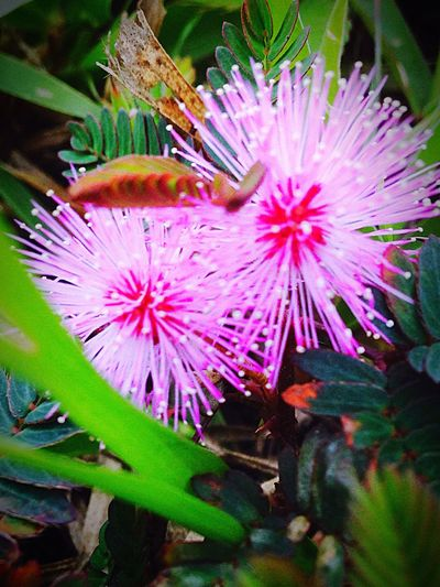Sometimes the little things trip you up. First Eyeem Photo Pink And Purple Flowers Nature