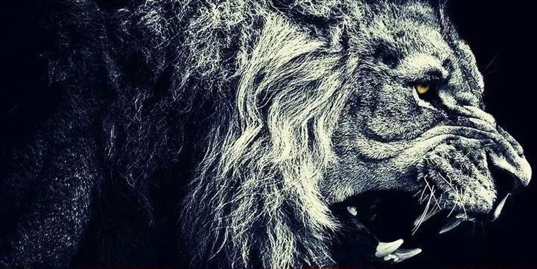 Hello World Lion Me Life Hanging Out Relaxing Like Love Hi! King